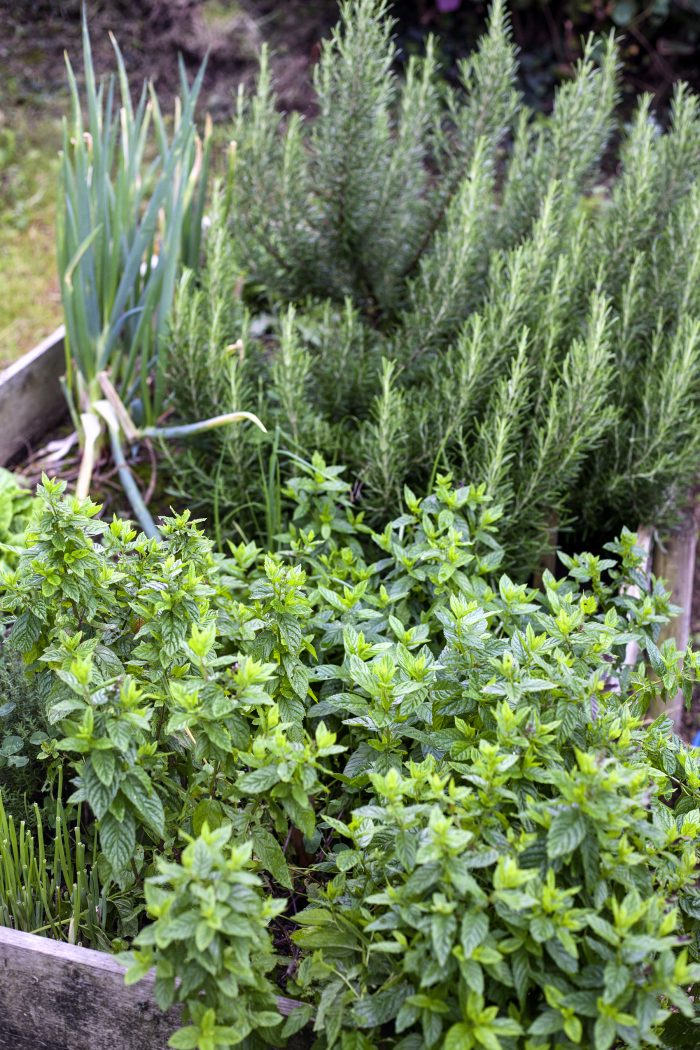 Lovely herb garden