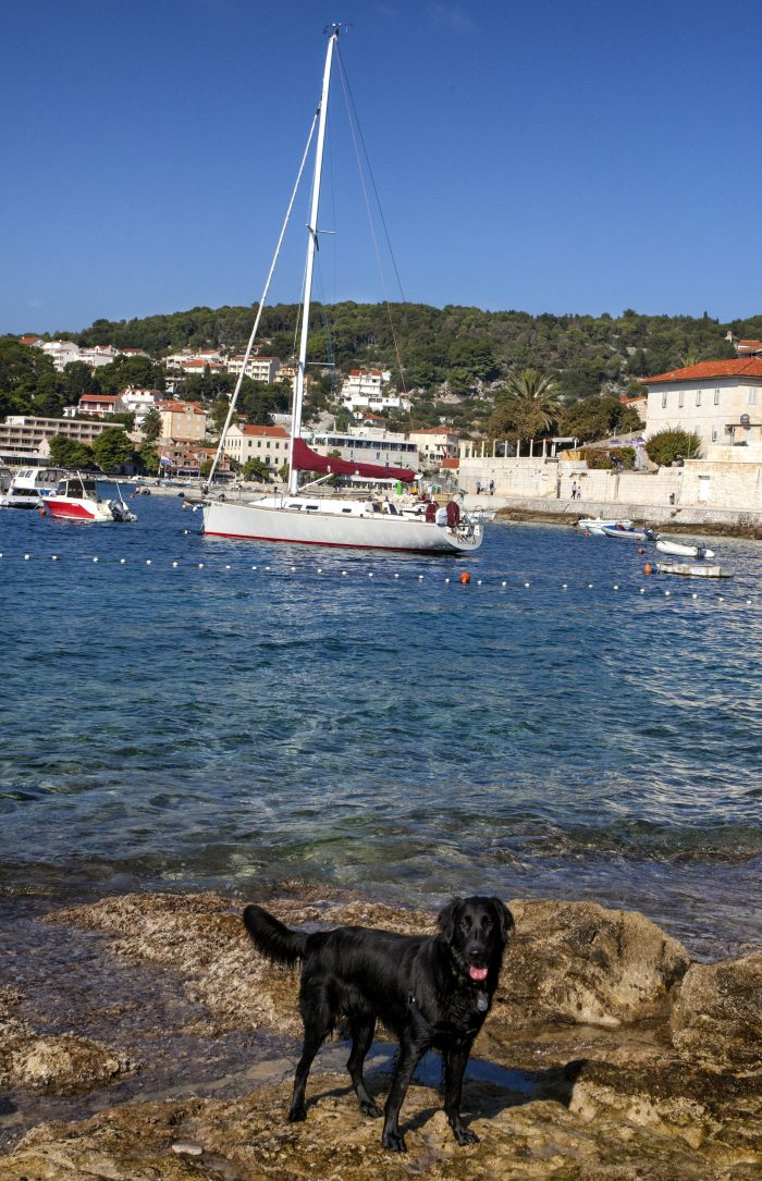 Harper in Hvar harbor